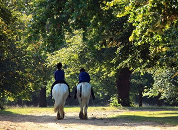 Hyde Park Riding Stables